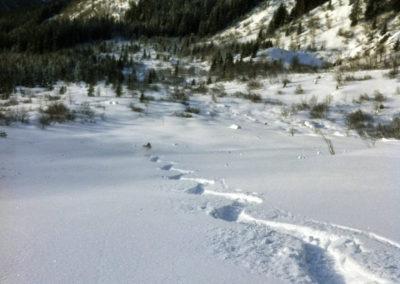renaud-courtois-guide-ski-horspiste-2014-7